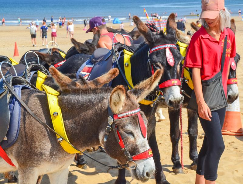 Beach Donkey Rides stock photo