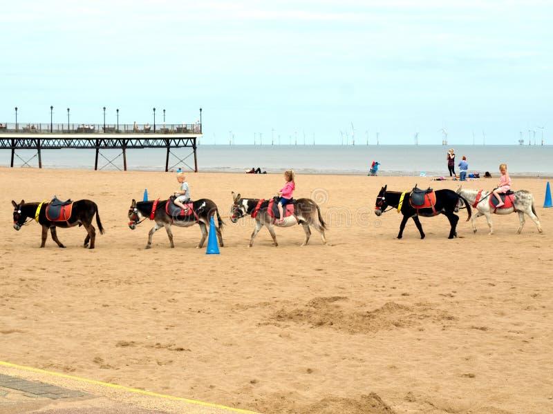 Beach Donkey Rides, Skegness. royalty free stock photo