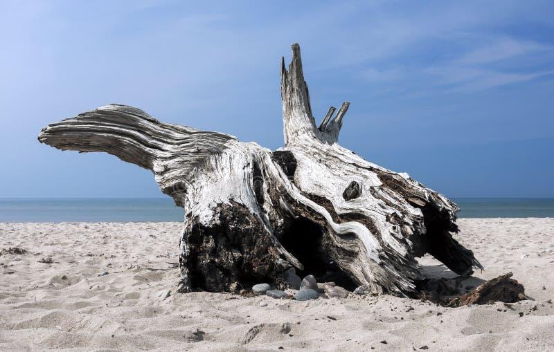 Beach drift. Lonely wooden drift on the beach stock image