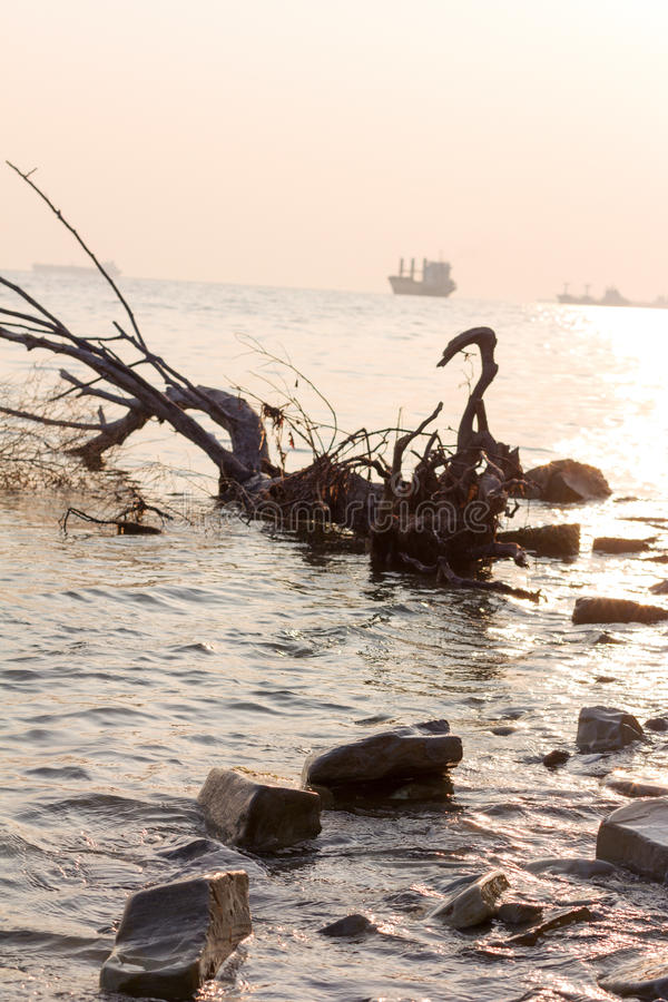 Beach, driftwood and ships against the setting sun. in the photo are not the usual perspective. Selective focus stock photos