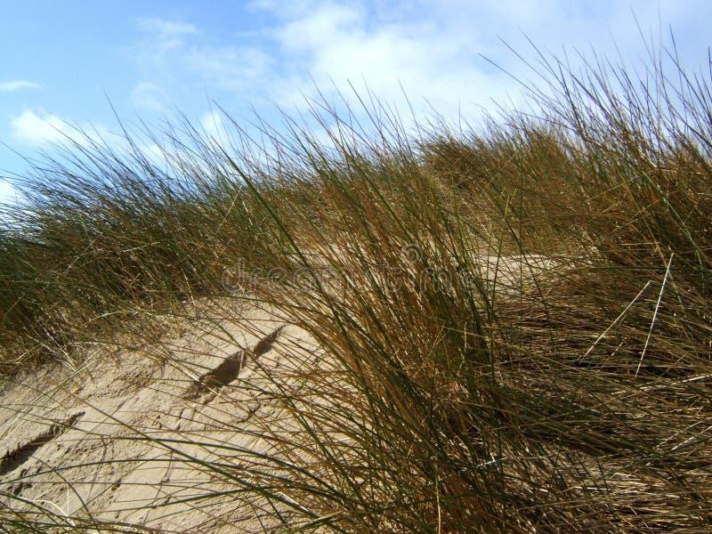 Beach dunes royalty free stock photo
