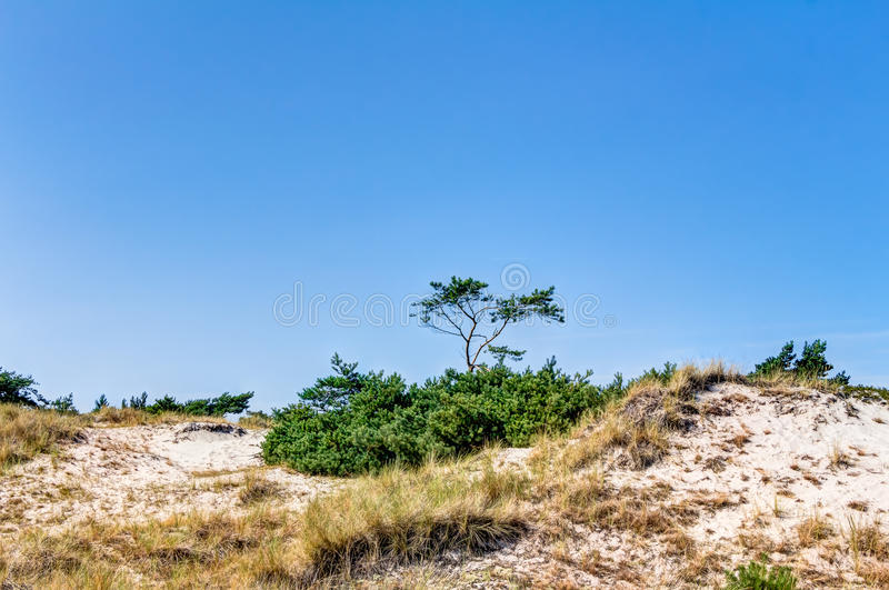 Beach and dunes with beachgrass. In summer at the Baltic Sea, Germany stock photography