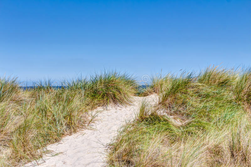 Beach and dunes with beachgrass. In summer at the Baltic Sea, Germany royalty free stock images