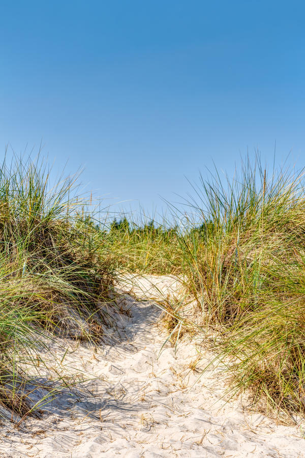 Beach and dunes with beachgrass. In summer at the Baltic Sea, Germany stock photos