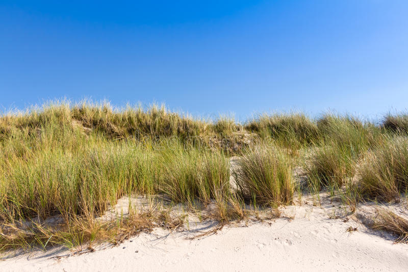 Beach and dunes with beachgrass. In summer at the Baltic Sea, Germany royalty free stock photography