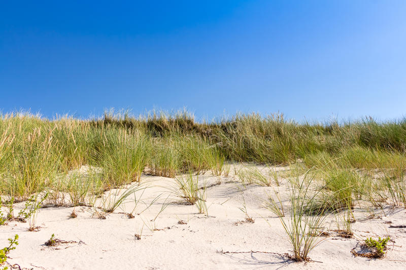 Beach and dunes with beachgrass. In summer at the Baltic Sea, Germany stock image