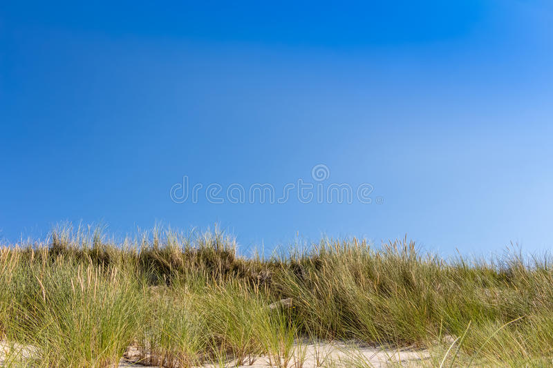 Beach and dunes with beachgrass. In summer at the Baltic Sea, Germany royalty free stock photos