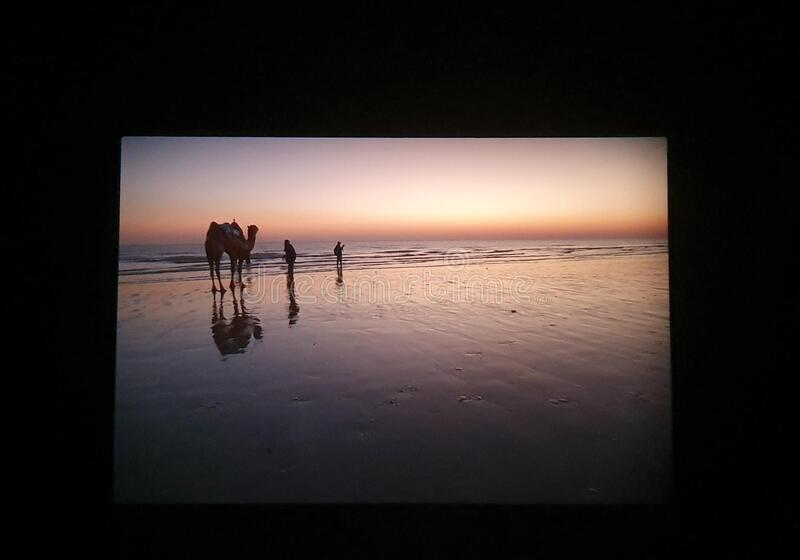 Beach evening with camel ride royalty free stock photos
