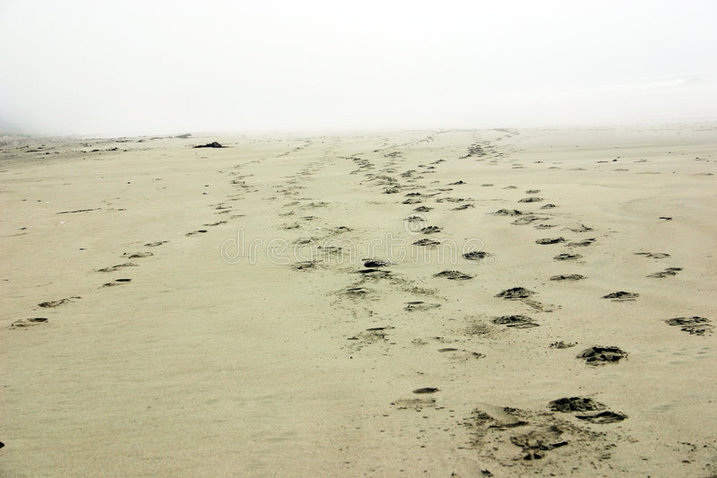 beach footprints fading away...Vancouver Island royalty free stock photos