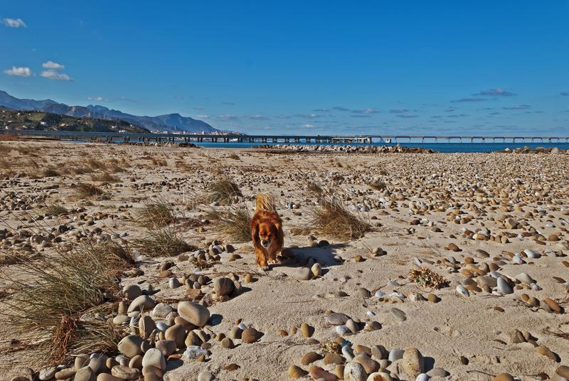 The beach is free in winter for a walk with my dog royalty free stock image