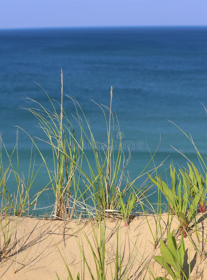 Beach Grass at the Ocean stock images
