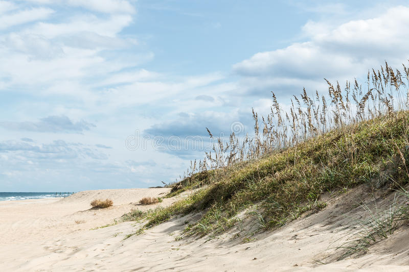Beach Grass in Sand Dunes stock photography