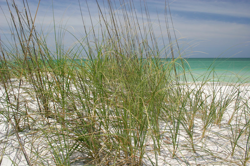 Download Beach Grasses stock image. Image of protection, beach, prevention - 783987