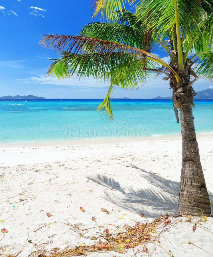 Download Green Tree On A White Sand Beach Stock Photo - Image: 41294044