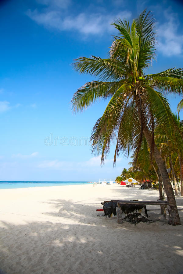 Download Beach on the Isla Mujeres stock photo. Image of edge - 11243602
