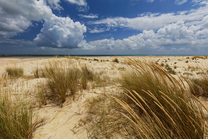 Download Beach On An Island In Ria Formosa, Portugal Stock Photo - Image: 93754865