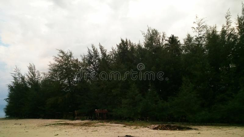 Seashore Forest royalty free stock photos