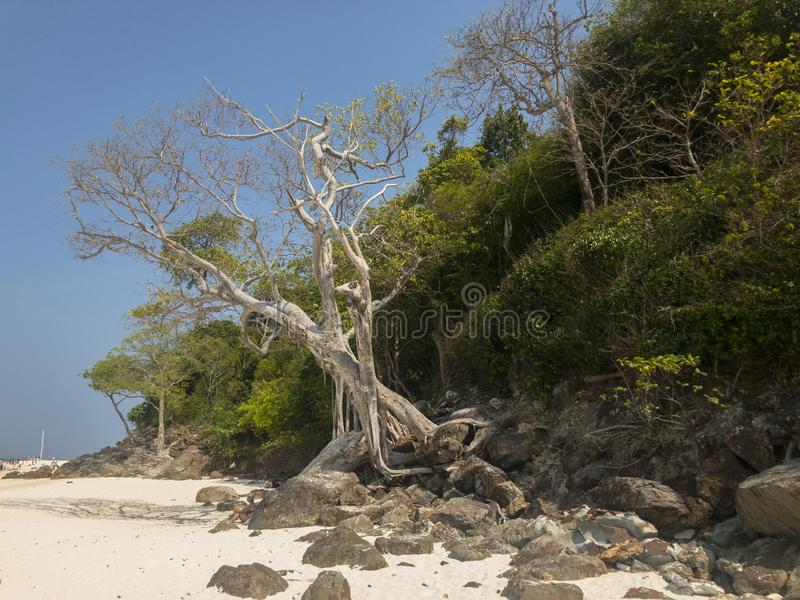 Beach of Krabi`s island royalty free stock images