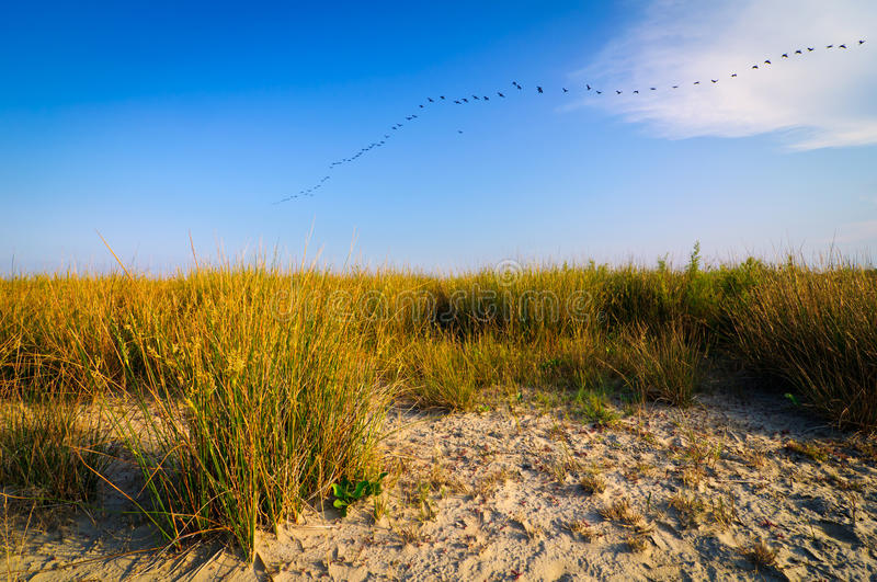Beach landscape danube delta stock photos