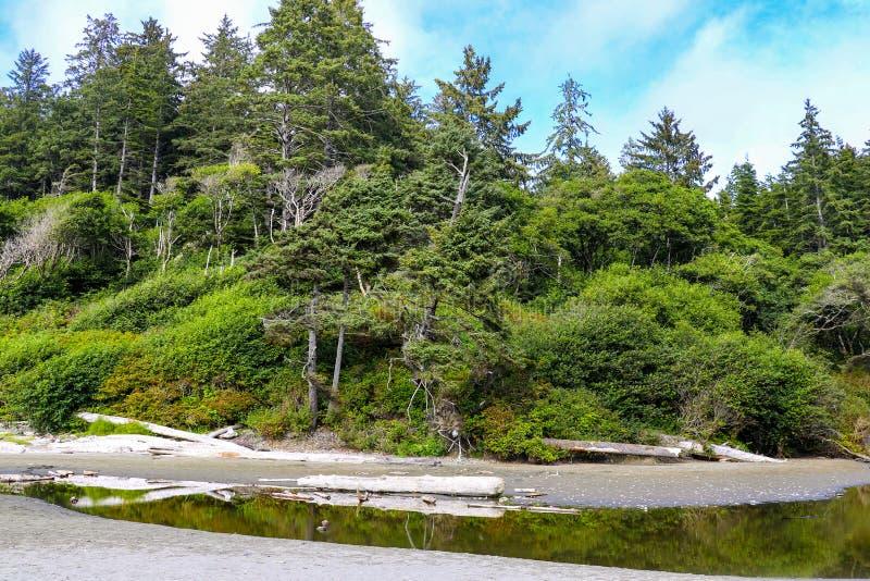Beach landscape in Olympic National Park, Washington, USA.  stock photography