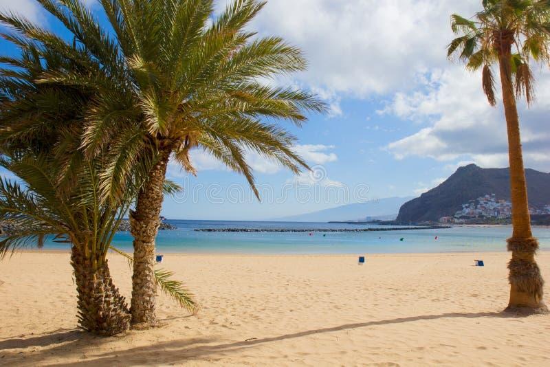 Beach las Teresitas, Tenerife. Palms and golden beach las Teresitas, Tenerife, Spain royalty free stock images