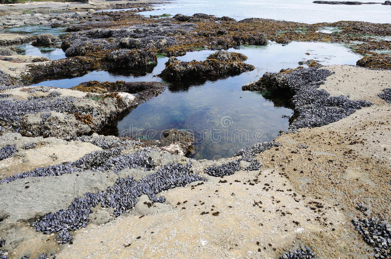 Beach in low tide royalty free stock photo