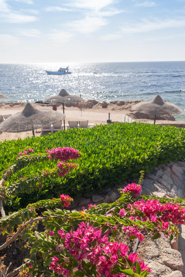 Beach at the luxury hotel, Sharm el Sheikh, Egypt. The beach at the luxury hotel, Sharm el Sheikh, Egypt. in the foreground blooming bougainvillea royalty free stock photography