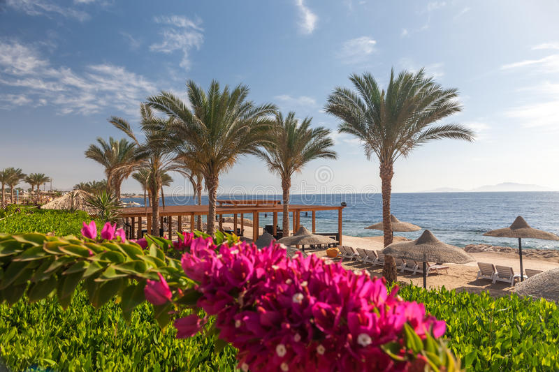 Beach at the luxury hotel, Sharm el Sheikh, Egypt. The beach at the luxury hotel, Sharm el Sheikh, Egypt. in the foreground blooming bougainvillea stock images