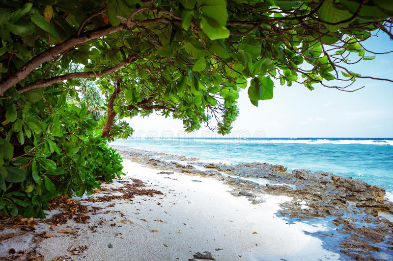 Beach at Maldives island Fulhadhoo with white sandy beach and sea and curve palm. Scenic view of Wild Beach at Maldives island Fulhadhoo with white sandy beach royalty free stock image