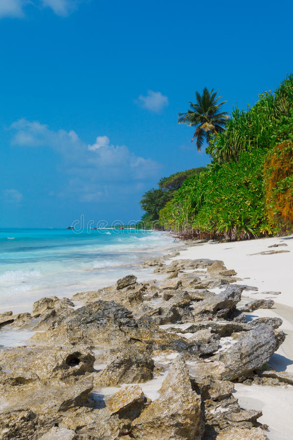 Beach at Maldives island Fulhadhoo with white sandy beach and sea and curve palm. Scenic view of Wild Beach at Maldives island Fulhadhoo with white sandy beach stock photography
