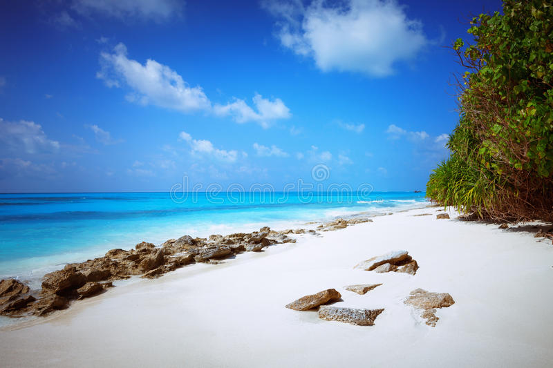 Beach at Maldives island Fulhadhoo with white sandy beach and sea and stones and rocks. Scenic view of Wild idyllic Beach at Maldives island Fulhadhoo with white royalty free stock photos