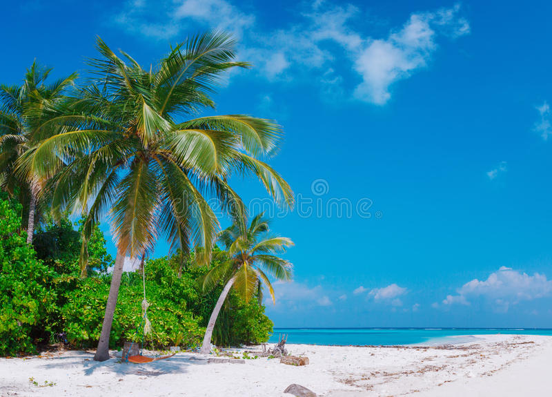 Beach at Maldives island Fulhadhoo with white sandy idyllic perfect beach and sea and curve palm. Scenic view of Wild idyllic Beach at Maldives island Fulhadhoo royalty free stock photography