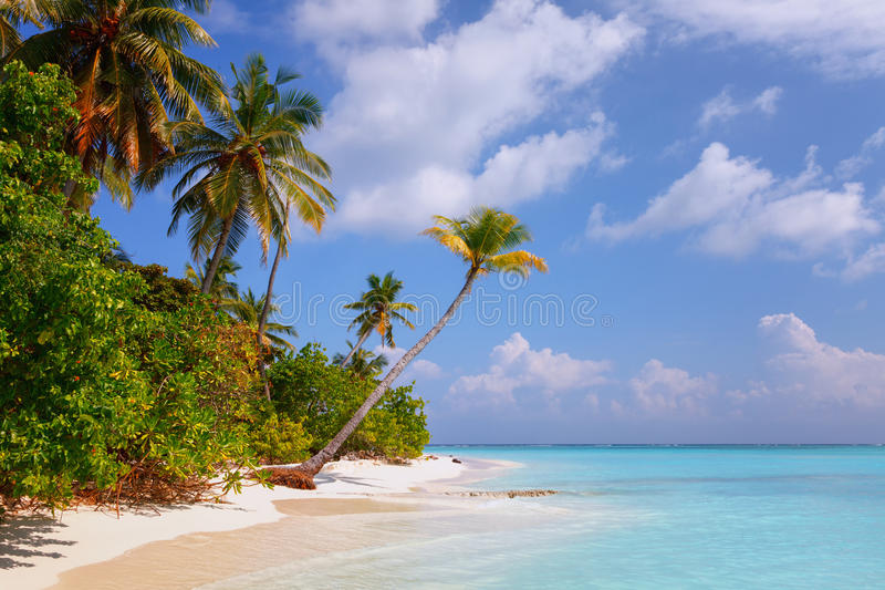 Beach at Maldives island Fulhadhoo with white sandy idyllic perfect beach and sea and curve palm. Scenic view of Wild idyllic Beach at Maldives island Fulhadhoo royalty free stock photos