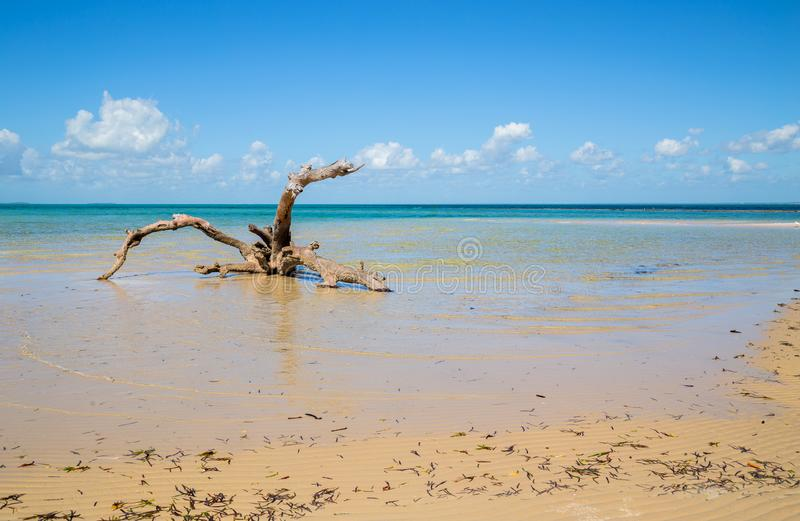 Beach in Mozambique royalty free stock photo