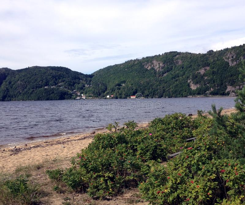 Beach in Norway. Sandy beach with green bushes at the Lyngdals fjord in Norway royalty free stock image