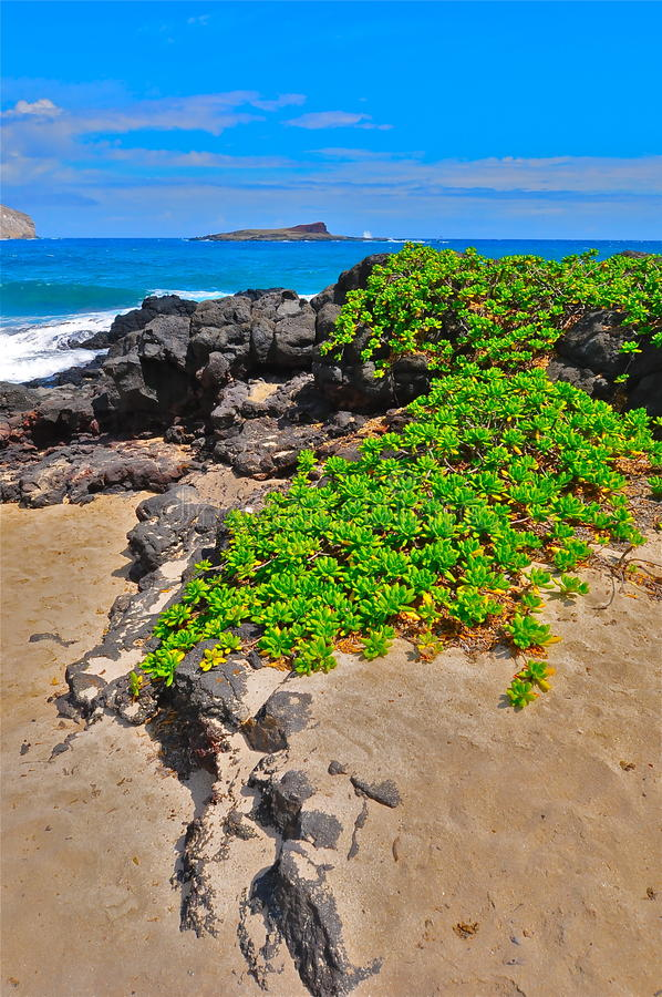 Download Beach in Oahu stock image. Image of tour, tourism, travel - 24253653