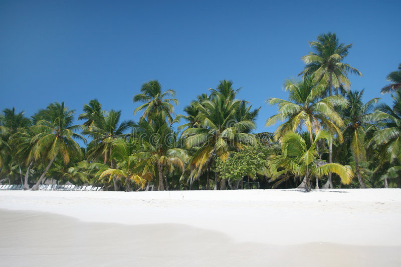 Beach, Ocean And Palm Trees Royalty Free Stock Image
