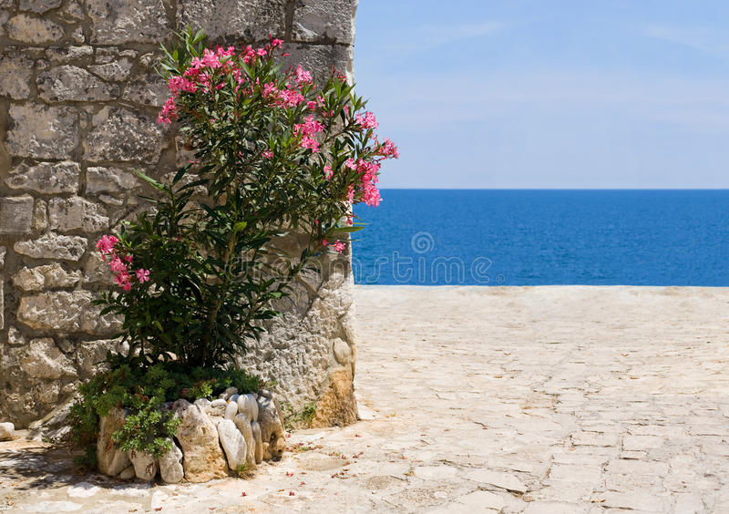 Beach And Oleander Stock Images