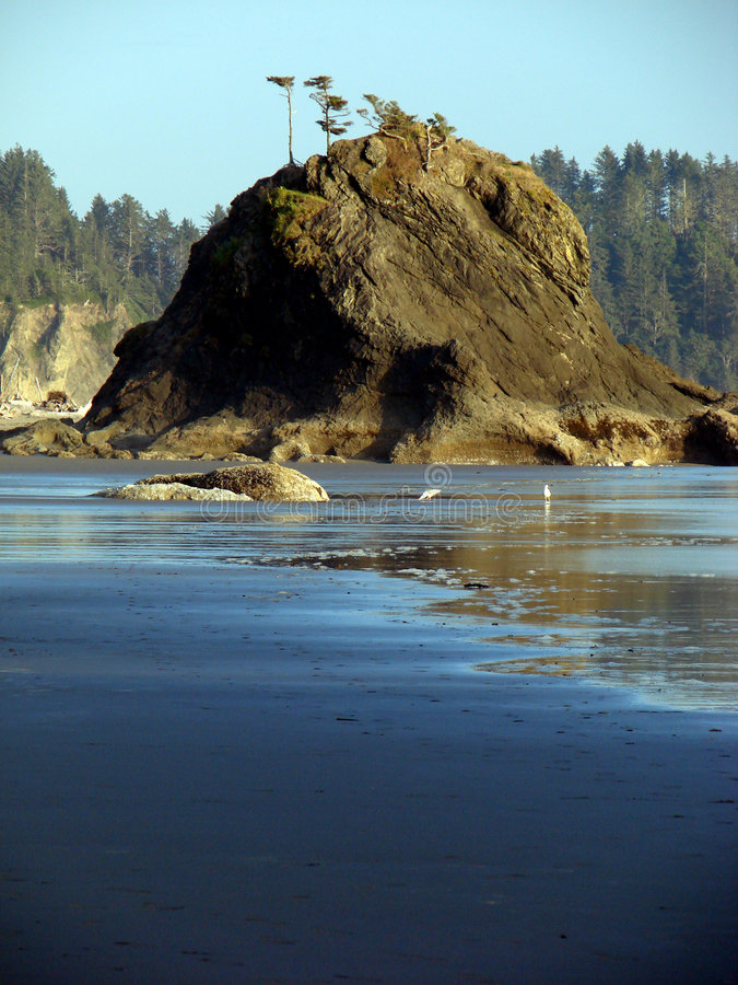 Download Beach, Olympic National Park Stock Photo - Image: 3434594