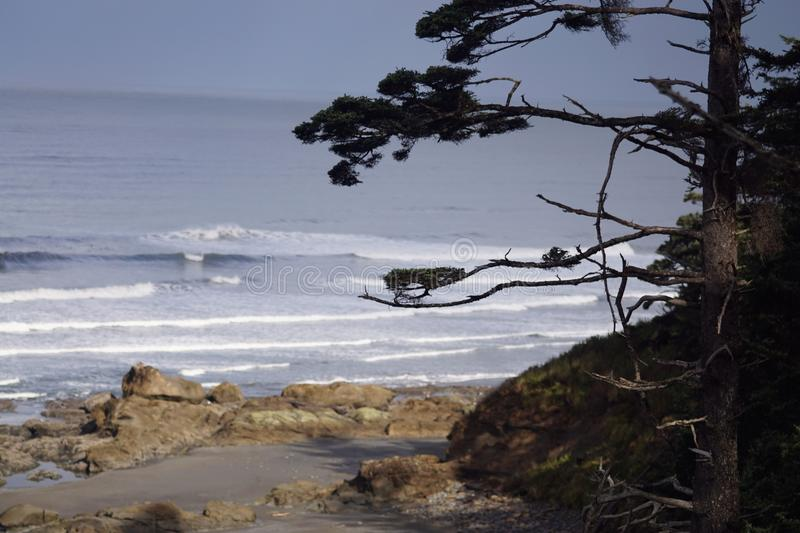 Beach #4 Olympic national park royalty free stock photography