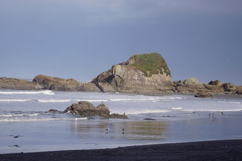 Beach #4 Olympic national park stock images