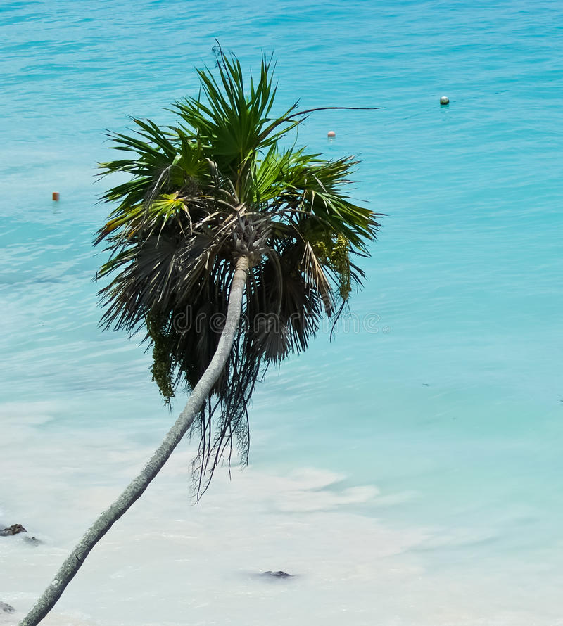 Download Beach palm stock image. Image of paradise, adult, seaside - 25679031