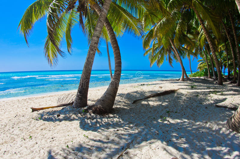 Beach With Palm Royalty Free Stock Photo