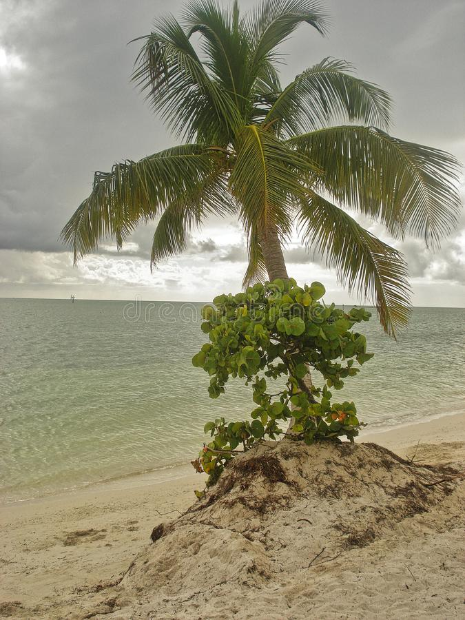 Beach and palm and cloudy weather. Back stock photos
