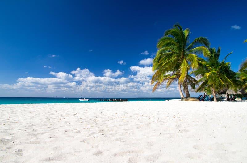 Beach And Palm Tree Stock Photo
