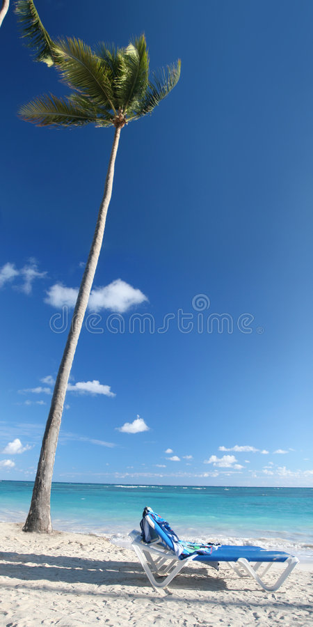 Download Beach, Palm Tree, Chairs stock image. Image of blue, cuba - 7767555