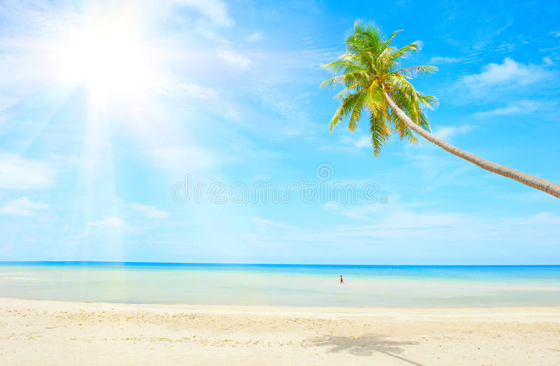 Beach with palm tree over the sand stock images