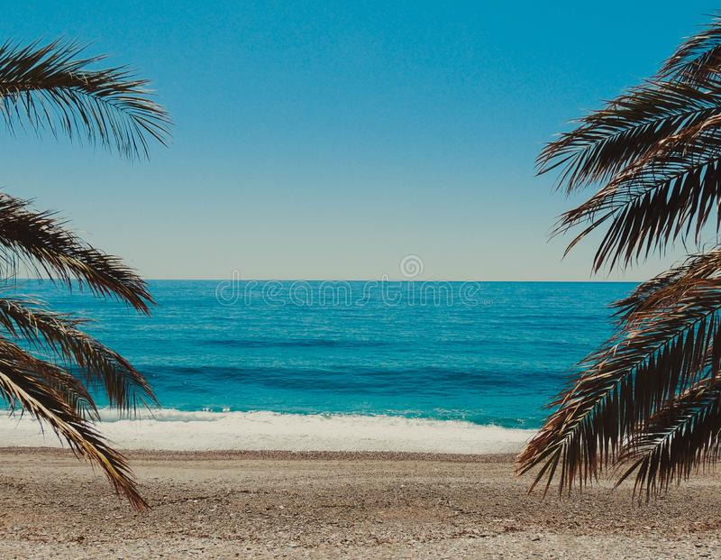 Beach and Palm Tree Poster royalty free stock photos