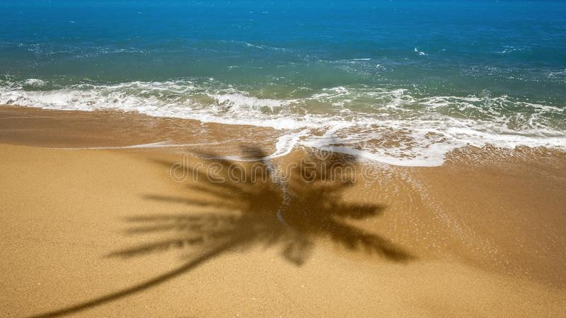 beach with palm tree shadow stock images