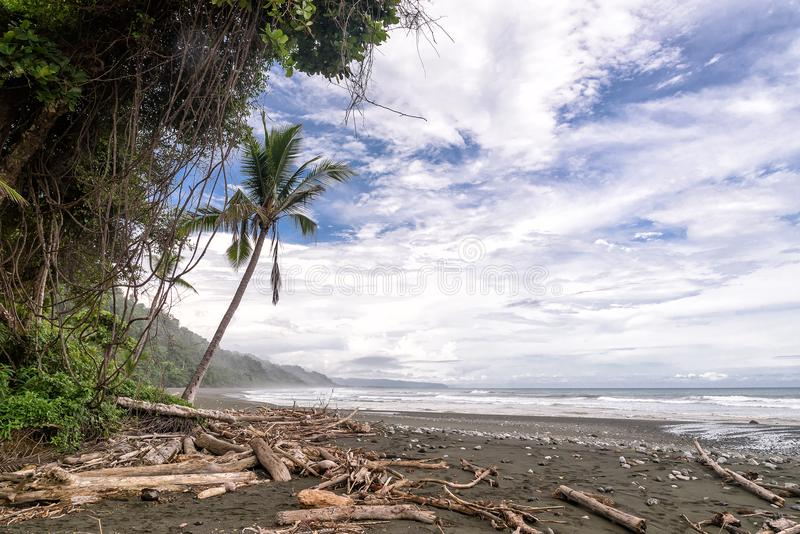 Beach with palm trees in Corcovado national park. Tropical beach with palm trees in Corcovado national park in Costa Rica stock photography